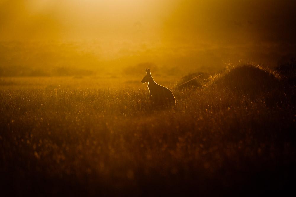 Australien – von Tom Price nach Kalbarri