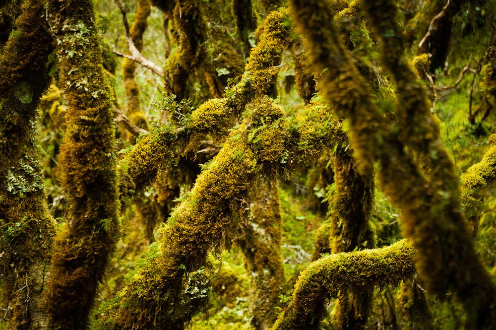 Neuseeland, Routeburn Track, Milford Sound, Catlins, Otago, Akaroa