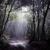 Im Nebelwald bei