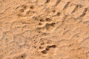 Leopardenspuren